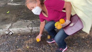 Photo of Los mangos se convirtieron en un alivio para el hambre de los venezolanos más pobres
