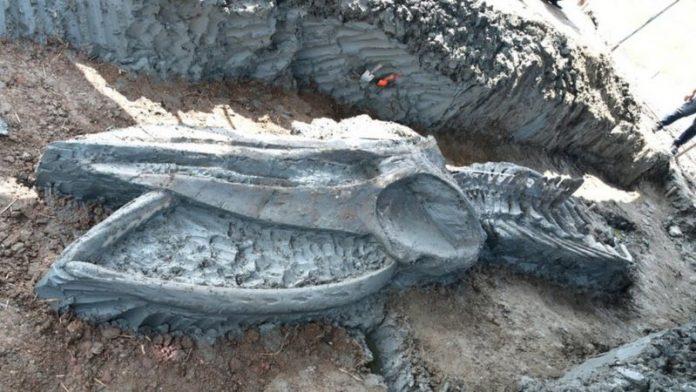 Photo of Hallan en Tailandia el esqueleto casi intacto de una ballena de hace al menos 3.000 años